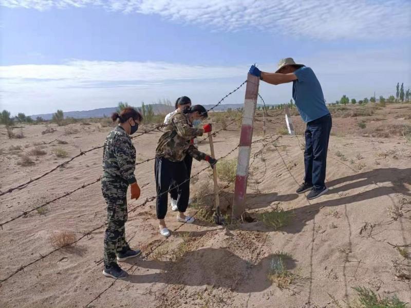 南湖保护站埋设维修区域界桩护网