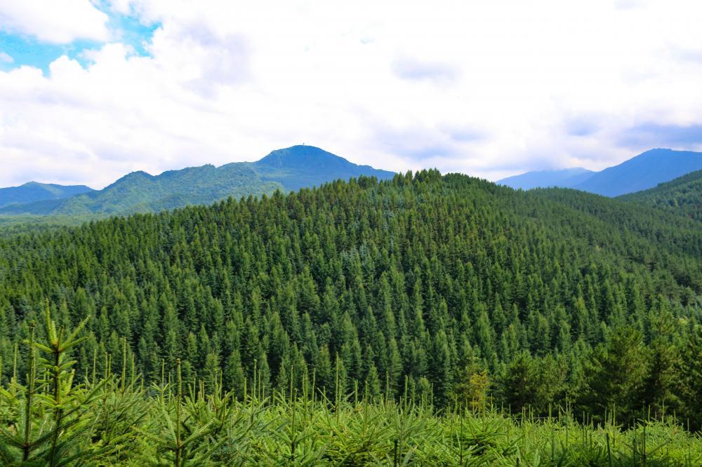 """太子山保护区""""十三五""""生态建设大见成效"""